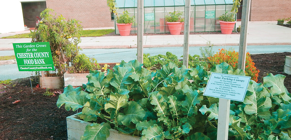 Vegetables growing in a school garden